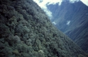 Andes_Mountain_Tropical_Forest.jpg